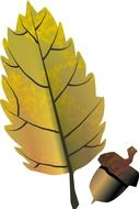 acorn and yellow oak leaf, illustration