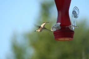 Tiny hummingbird in nature