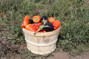 harvest of vegetables in a wooden bucket