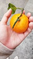 yellow orange on the palm