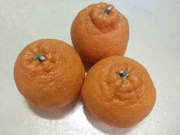 oranges of jeju island