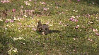 squirrel on a flowering meadow