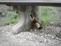 beer bottle under the bench
