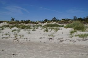 dune landscape of the baltic sea
