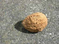 inshell walnut in the sun