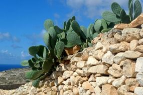 cactus plants on the rocks