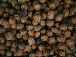 Lots of walnuts in a pile