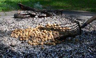 potato fire roast embers eat