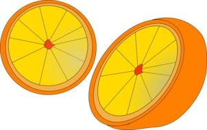 drawings of halves of an orange on a white background