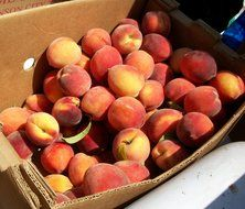 picture of the peaches in a market