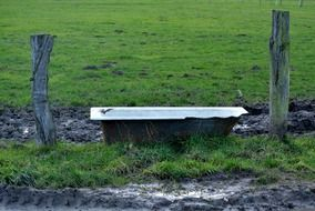 drinking trough on a pasture