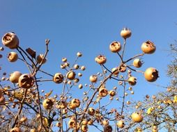 dry plant with seeds against a clear sky