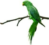 green perched parrot