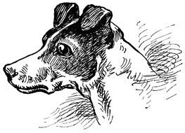Black And White Dog as graphic illustration