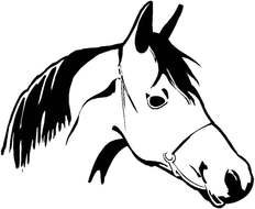 horse head in bridle, drawing