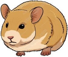 Cute brown Hamster, drawing