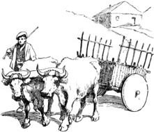 Oxen as a graphic illustration
