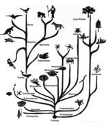 Black and white drawing of Evolution Tree clipart