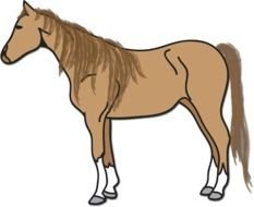 Beautiful drawing of the brown horse clipart