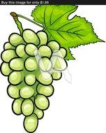Of Bunch White Or Green Grapes Grapevine Fruit Food Object