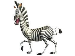 zebra from Madagascar