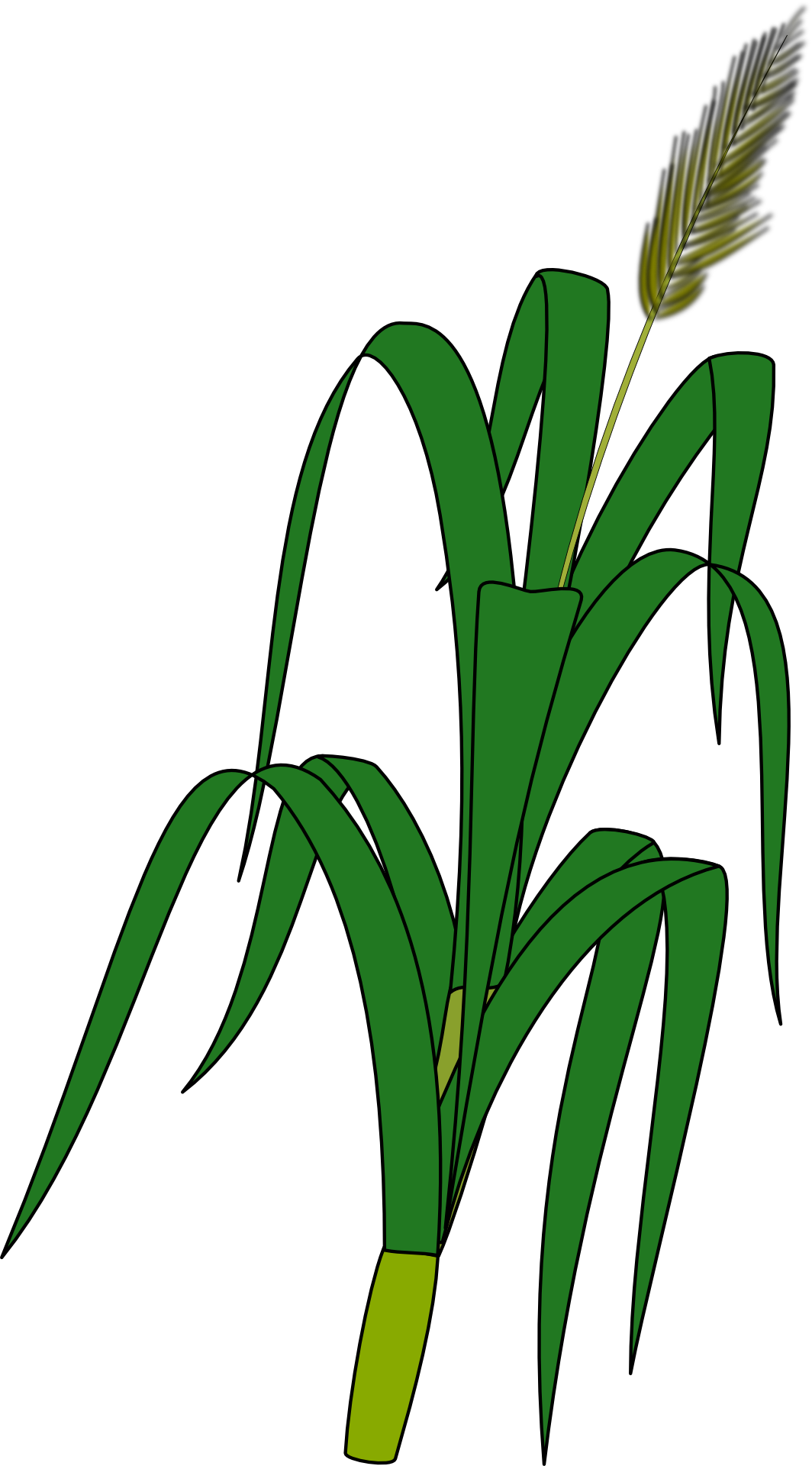 Drawn Corn Stalk Free Image See more ideas about corn stalks, wool applique, wool quilts. https pixy org licence php