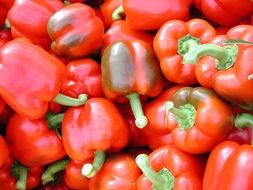 red glossy bell pepper, background
