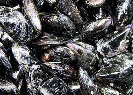 tasty mussels seafood