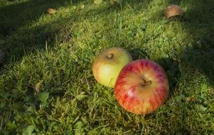 two big ripe apples on green grass