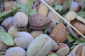Green brown almonds dried fruit puglia