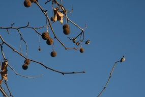 Balls on the branches