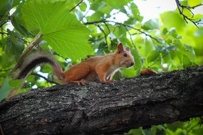 furry squirrel on tree