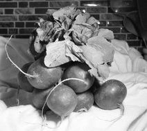 bunch of radish in black and white image