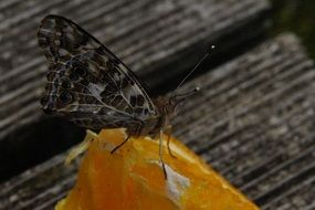 butterfly edelfalter orange fruit