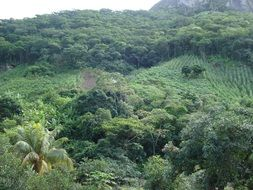 green vegetation in brazil