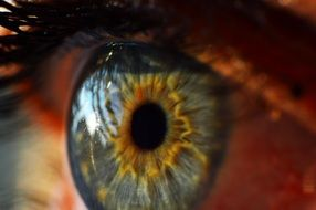 human eye close up view