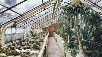 Different varities of plants in the greenhouse