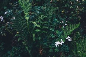 green fern in bushes
