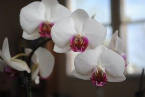 photo of white orchids