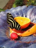 orange butterfly insect