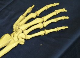 human hand skeleton on a black surface