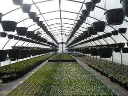 Ä°nside of big greenhouse