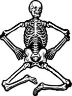 human skeleton with bent legs on a white background