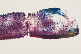 purple fingerprint