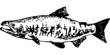 salmon fish animal food seafood black white drawing