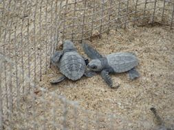 two little turtles in the aviary
