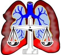 Clipart of lungs system