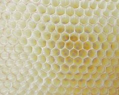 honeycomb work bee cell