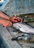 man's hands cutting fish