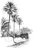 black and white drawing palm trees on an island